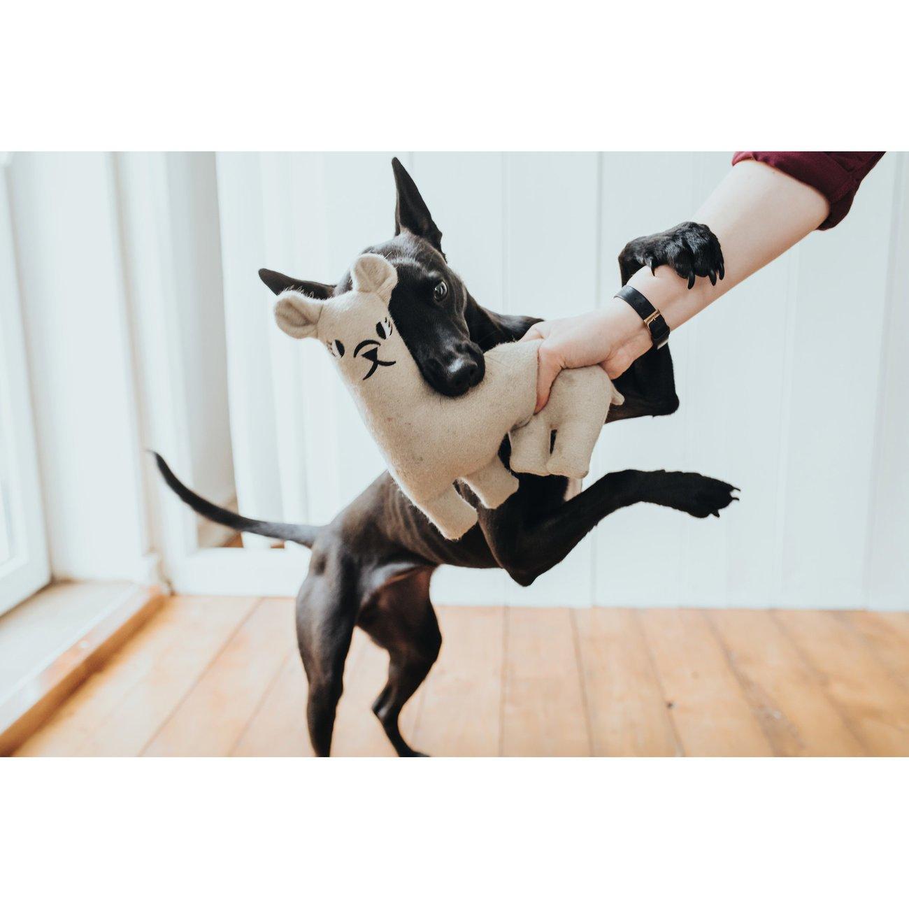 Hunter Hundespielzeug Tirana 67787, Bild 4