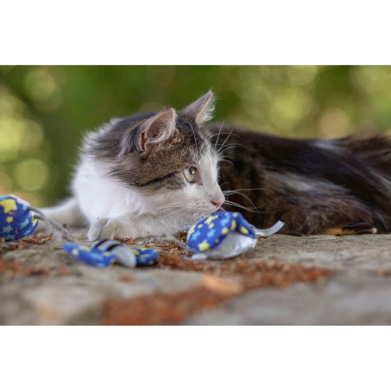 Hunter Katzenspielzeug Kerikeri 65740, Bild 5