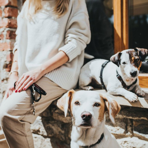 Hunter Verstellbare Führleine Tripoli für kleine Hunde 65543, Bild 6