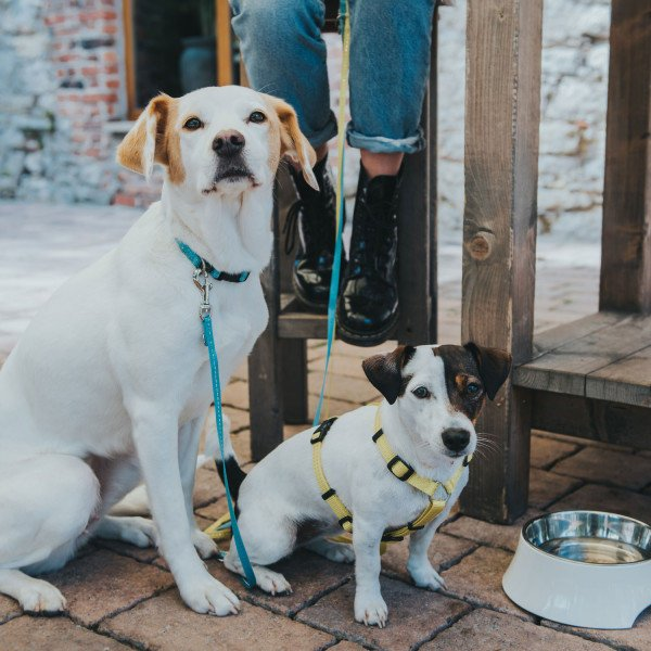Hunter Verstellbare Führleine Tripoli für kleine Hunde 65543, Bild 2