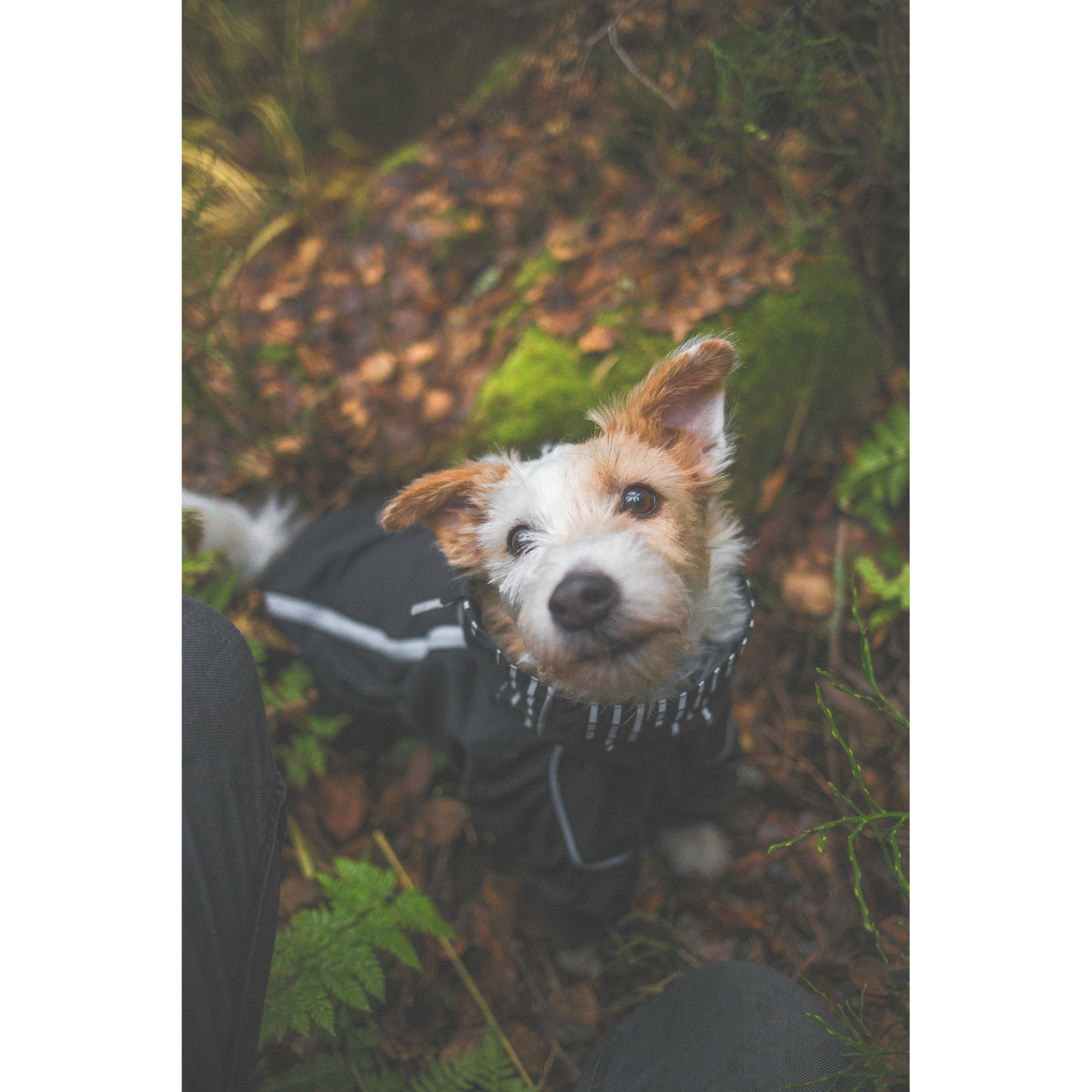 HURTTA Downpour Suit Regen-Overall für Hunde, Bild 9