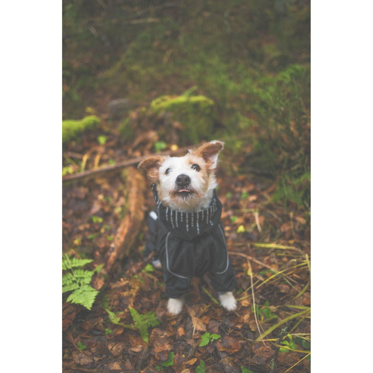 HURTTA Downpour Suit Regen-Overall für Hunde, Bild 10