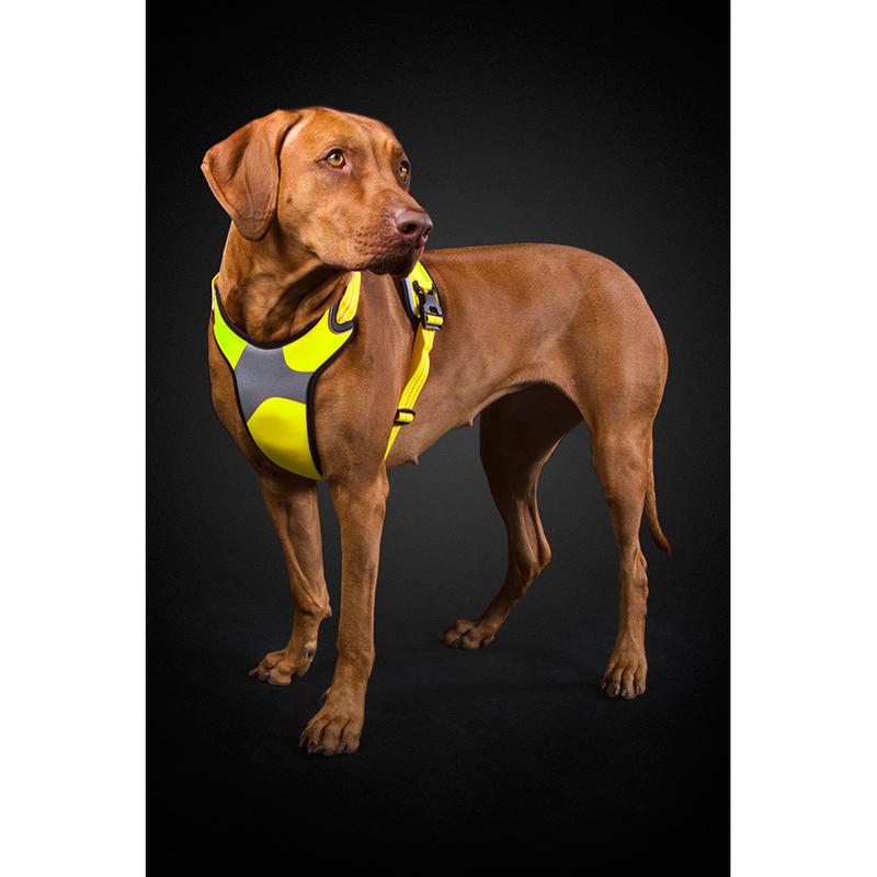 HURTTA Lifeguard Dazzle Hundegeschirr, Bild 6