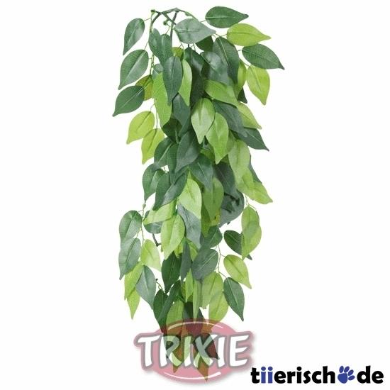 Terrarium Seidenpflanze, Ficus Bild 1