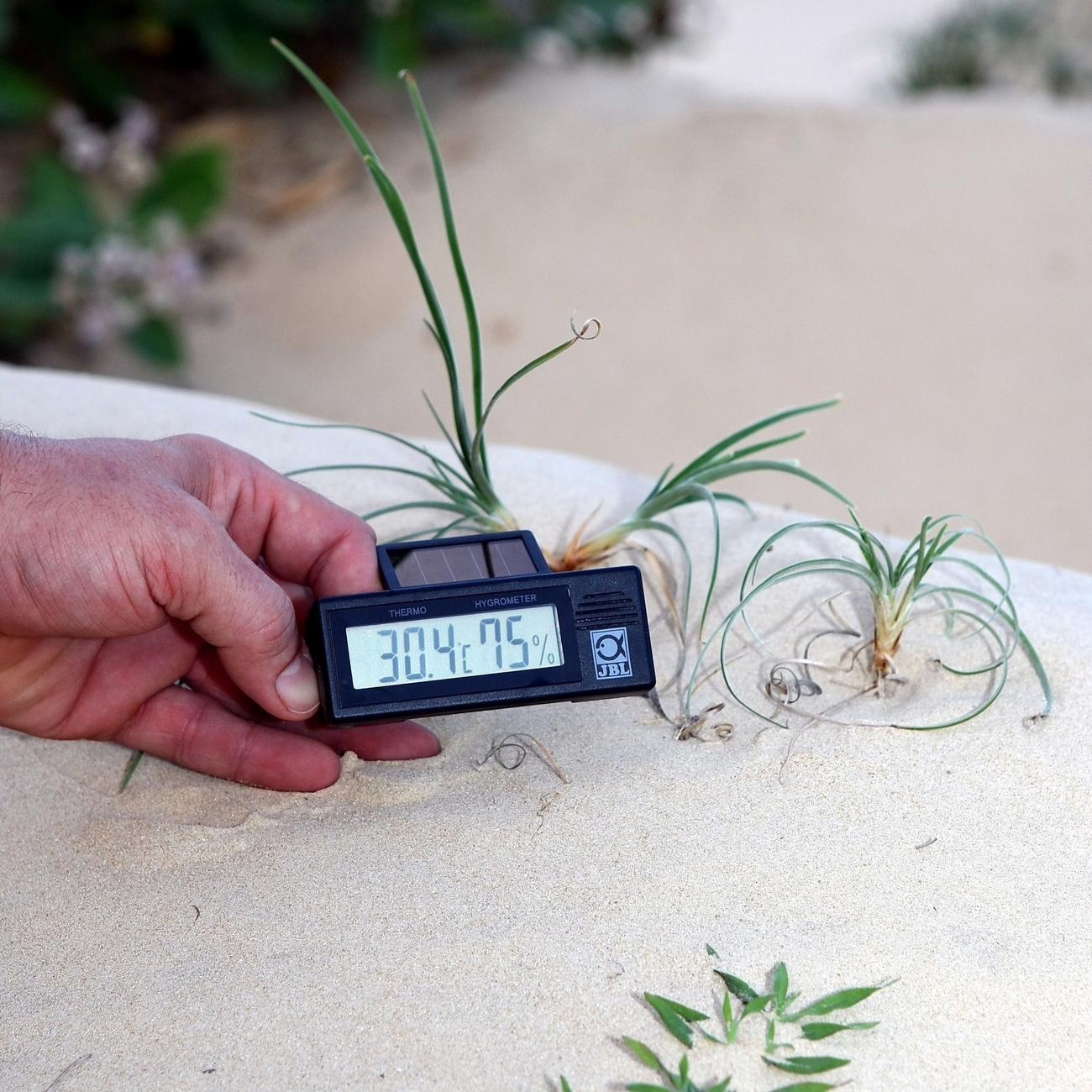 JBL TerraSand natur-weiß Bodengrund für Wüstenterrarien, Bild 3