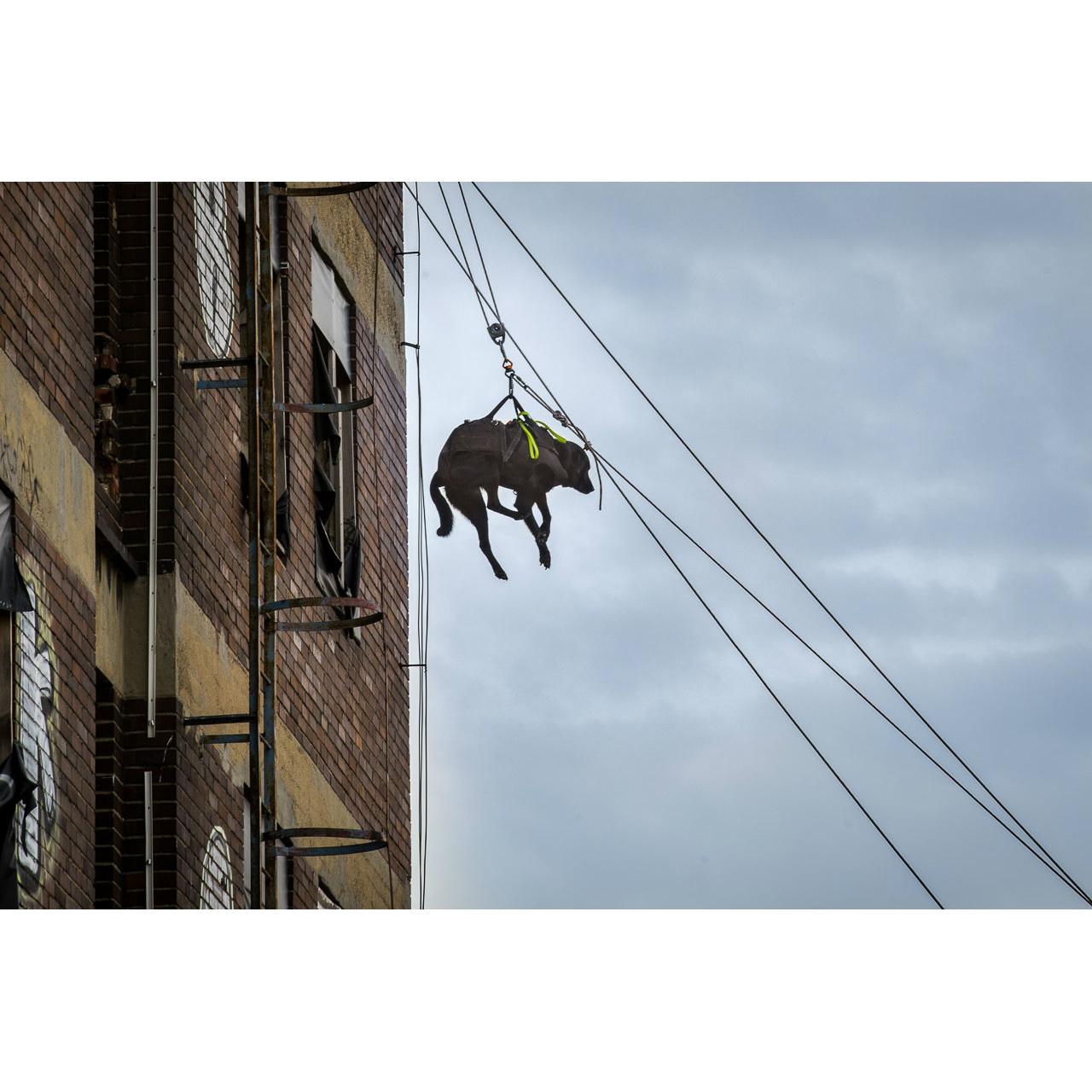Julius K9 Abseil- und Tragegeschirr für Hunde, Bild 14