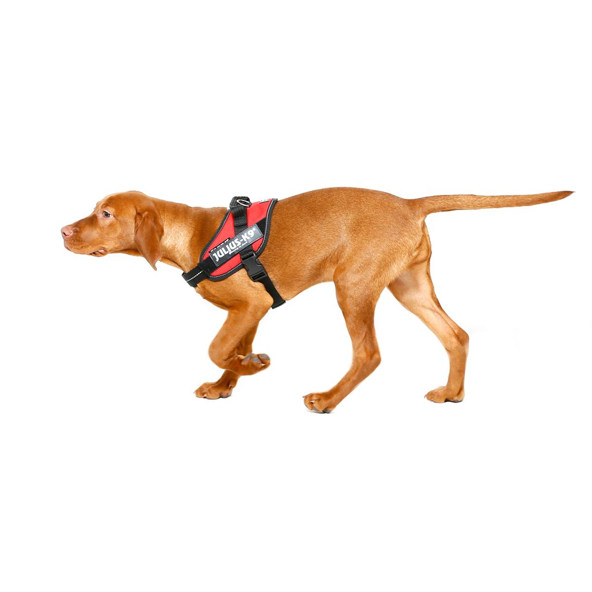 Julius K9 IDC® Powergeschirr® für Hunde, Bild 37