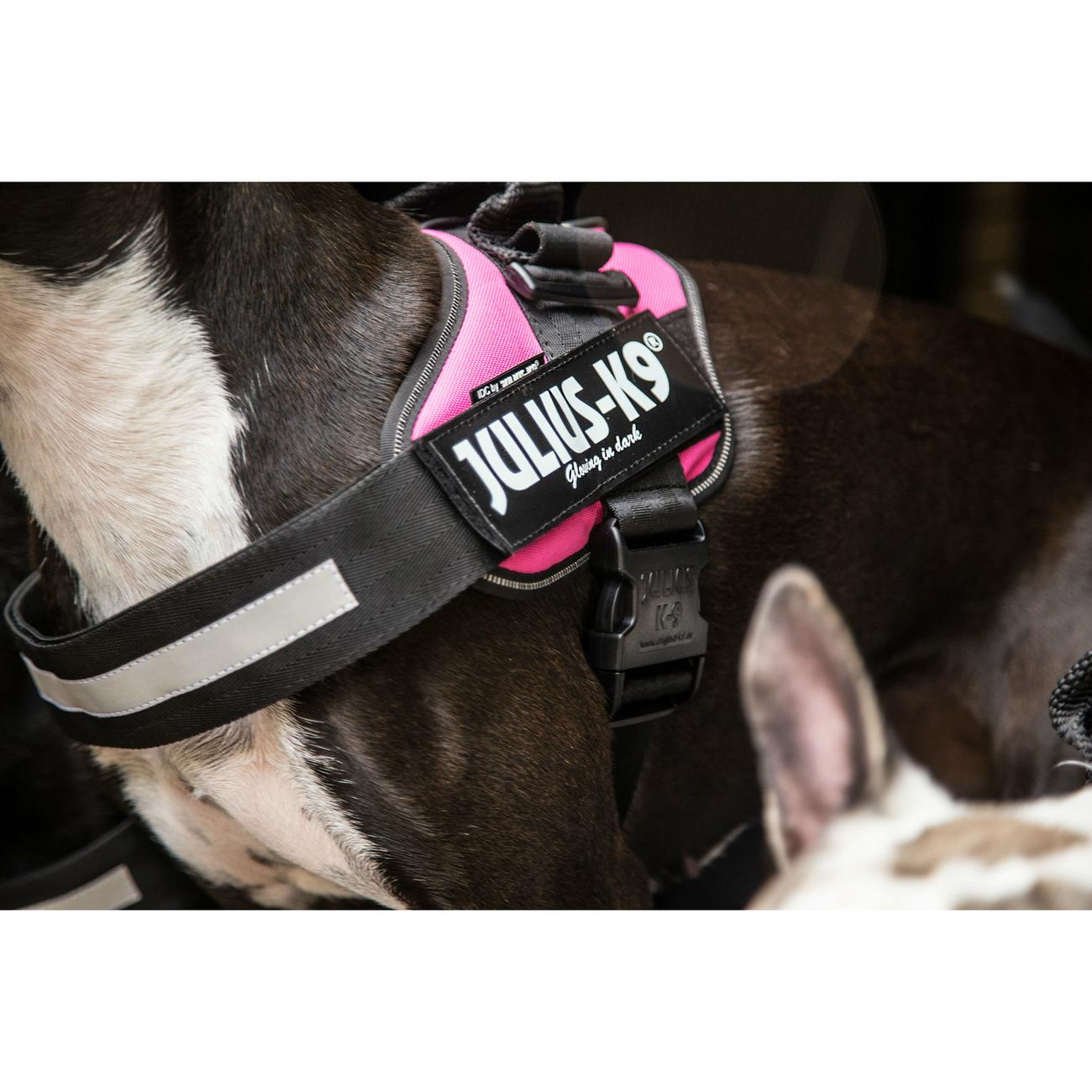 Julius K9 IDC® Powergeschirr® für Hunde, Bild 38