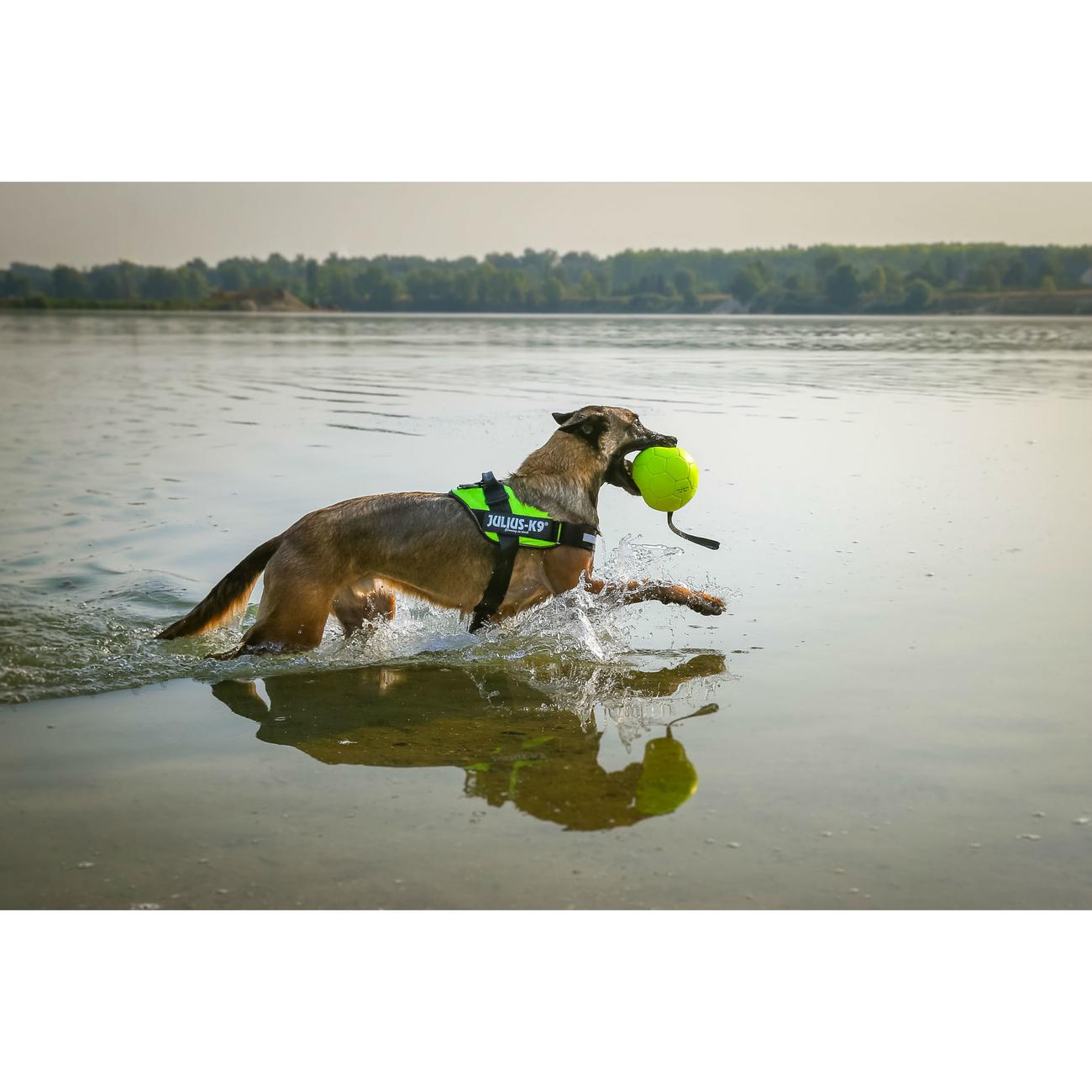 Julius K9 IDC® Powergeschirr® für Hunde, Bild 40