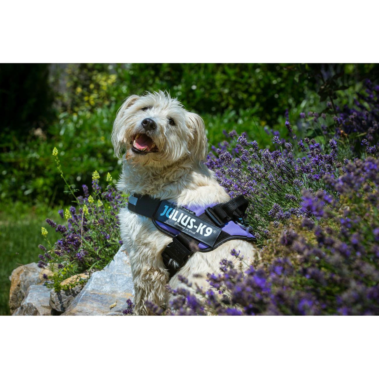 Julius K9 IDC® Powergeschirr® für Hunde, Bild 42