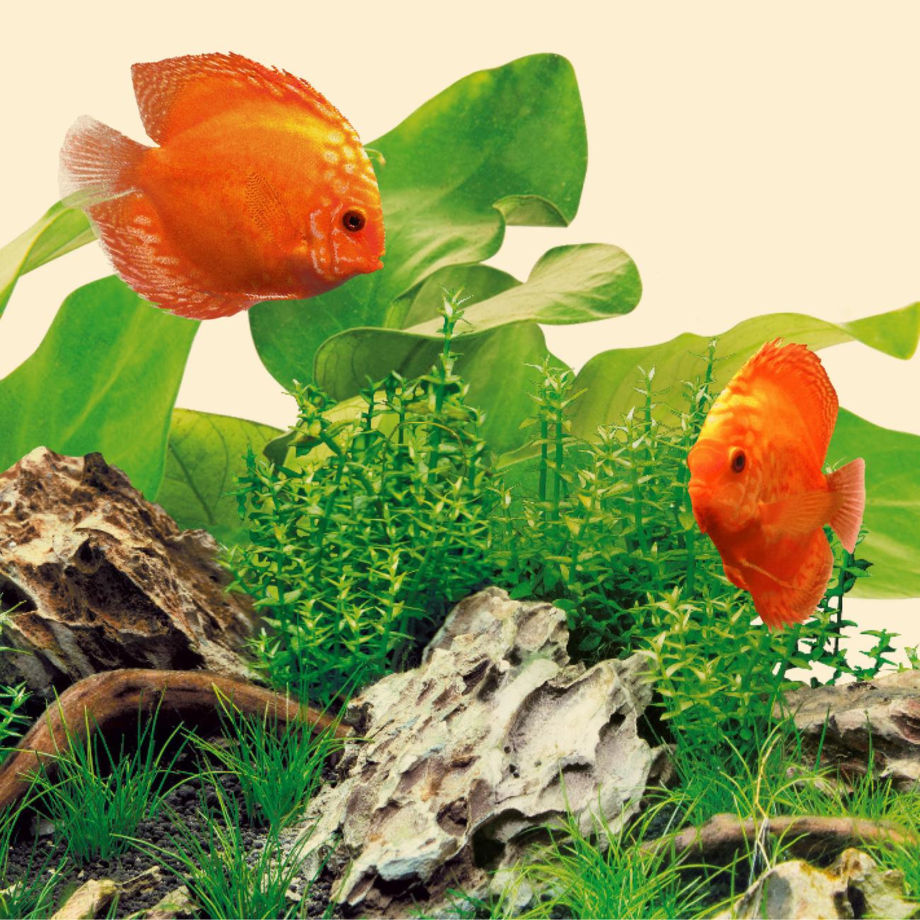 Juwel Aquarium Nature LED Leuchte, Bild 5