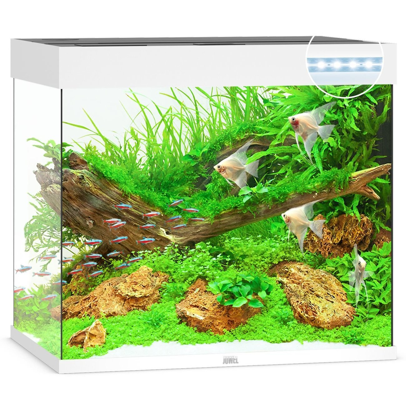 JUWEL Lido 200 LED Aquarium, 200 Liter, weiß