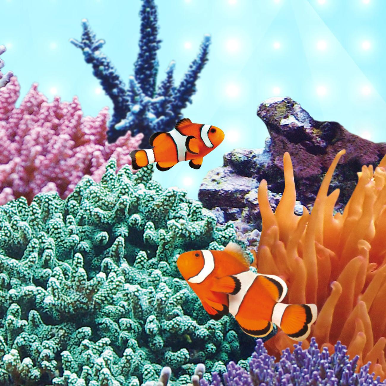Juwel MultiLux Marine LED Leuchtröhre Aquarium, Bild 5