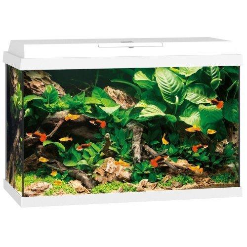 JUWEL PRIMO Aquarium, Primo 70, 61 x 31 x 44 cm, weiß