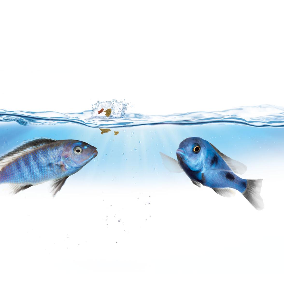 Juwel SmartFeed Premium Futterautomat Aquarium, Bild 5