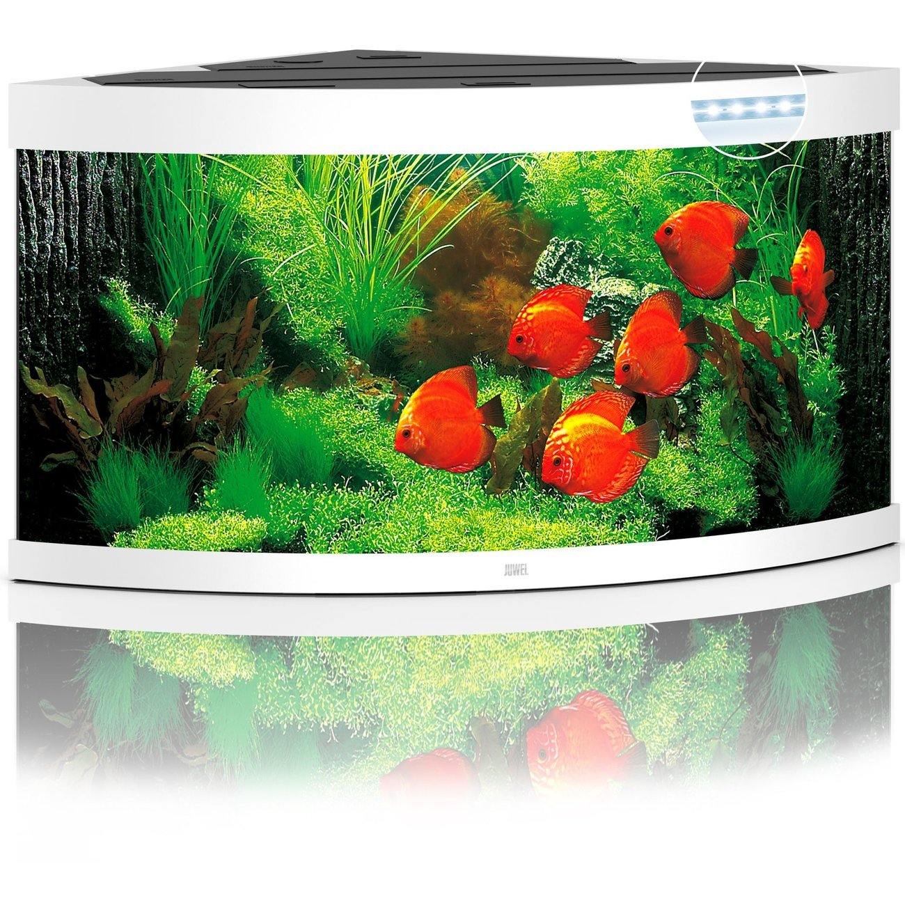 Juwel Trigon 350 LED Aquarium, Bild 4