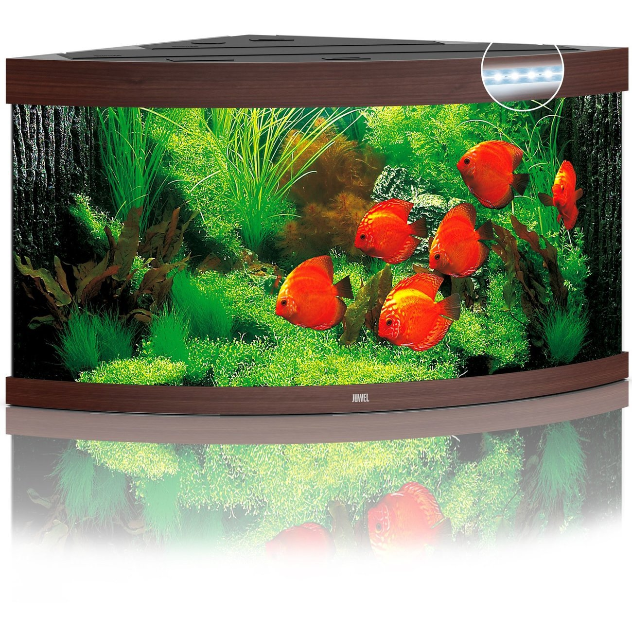 Juwel Trigon 350 LED Aquarium, Bild 2