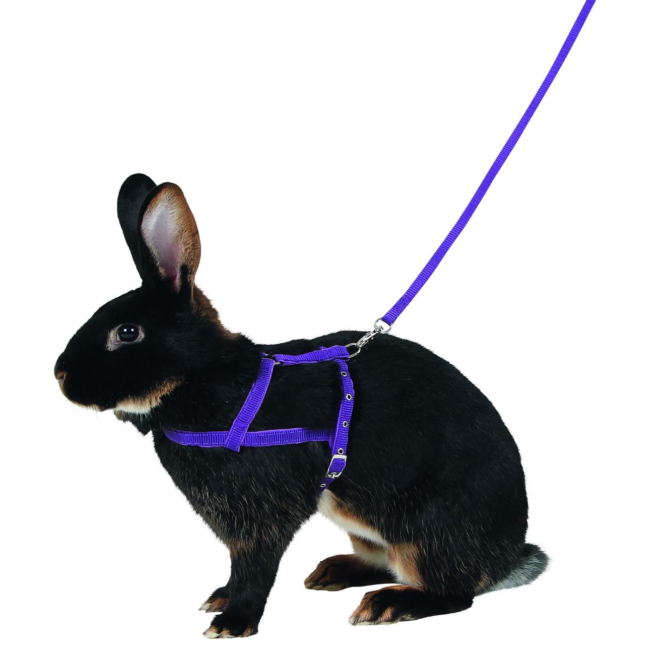 Kerbl Kaninchen Geschirr Agility mit Leine, M: 21 – 35 cm, lila