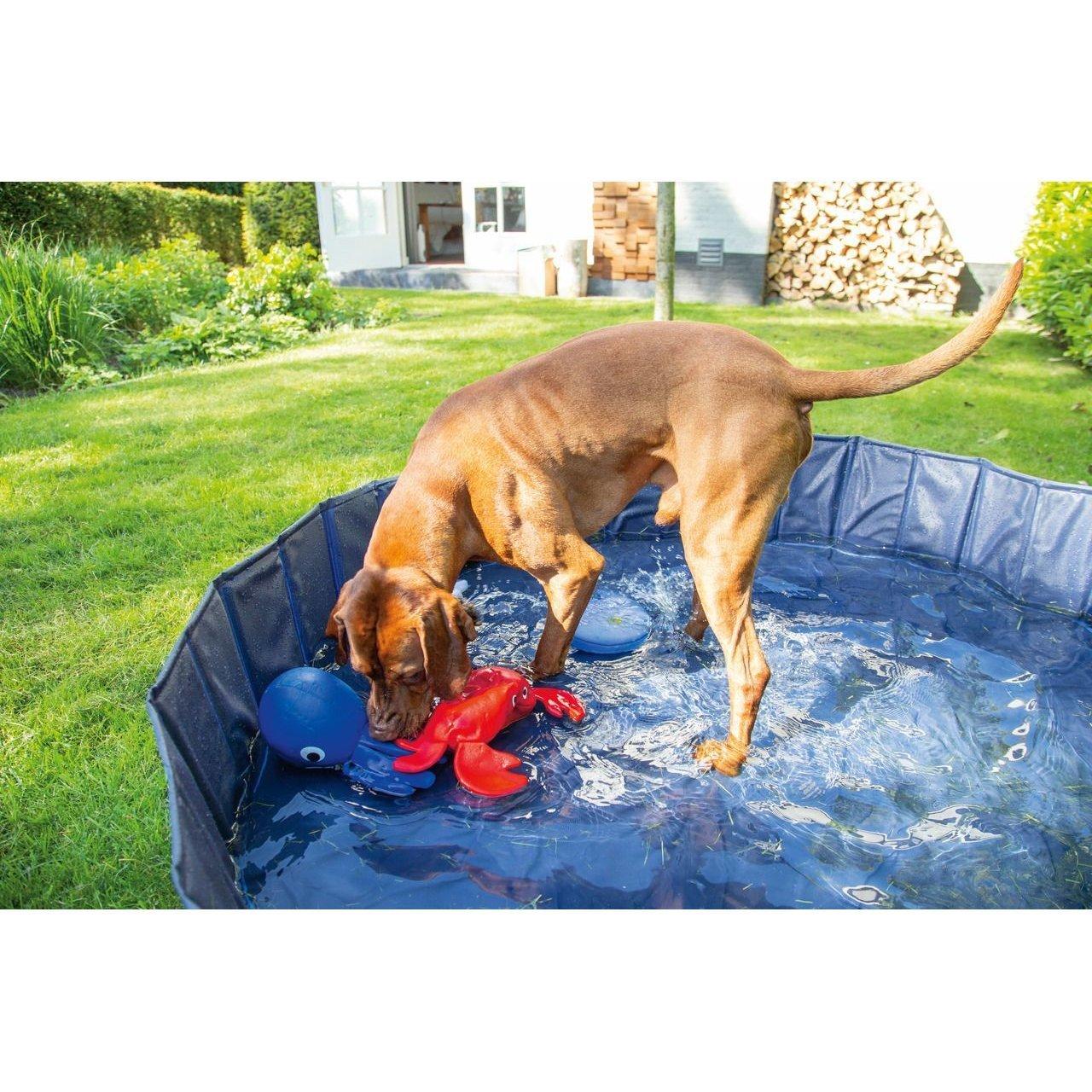 Karlie Doggy Pool, Bild 7