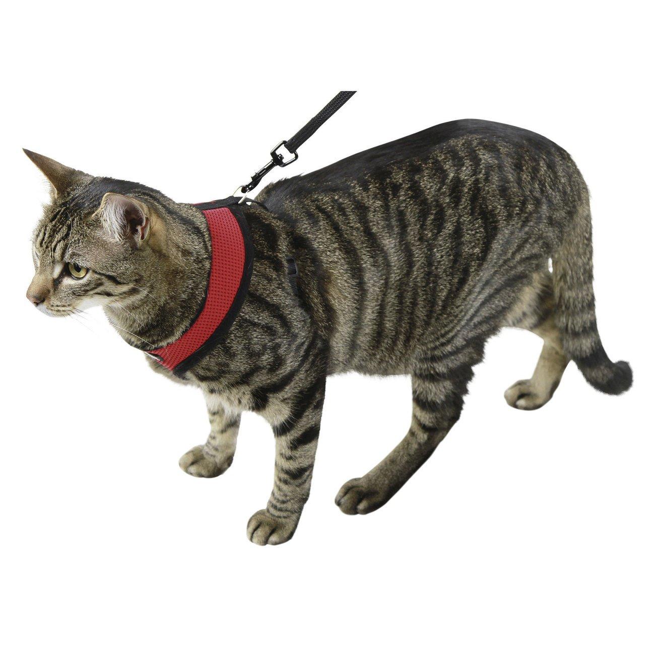 Kerbl Katzengeschirr Active mit Leine, Bild 3