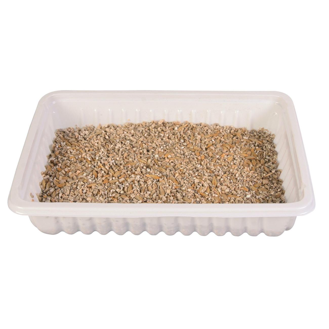 Trixie Katzengras Soft gras selber ziehen 4233, Bild 3