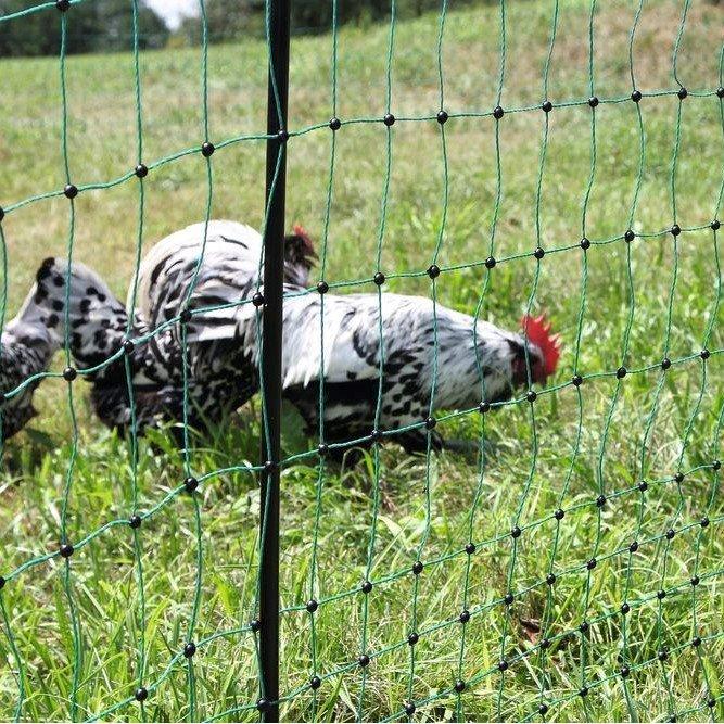 Geflügelnetz PoultryNet Bild 5