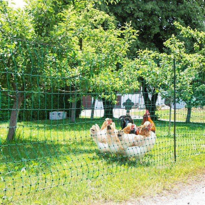 Geflügelnetz PoultryNet Bild 9