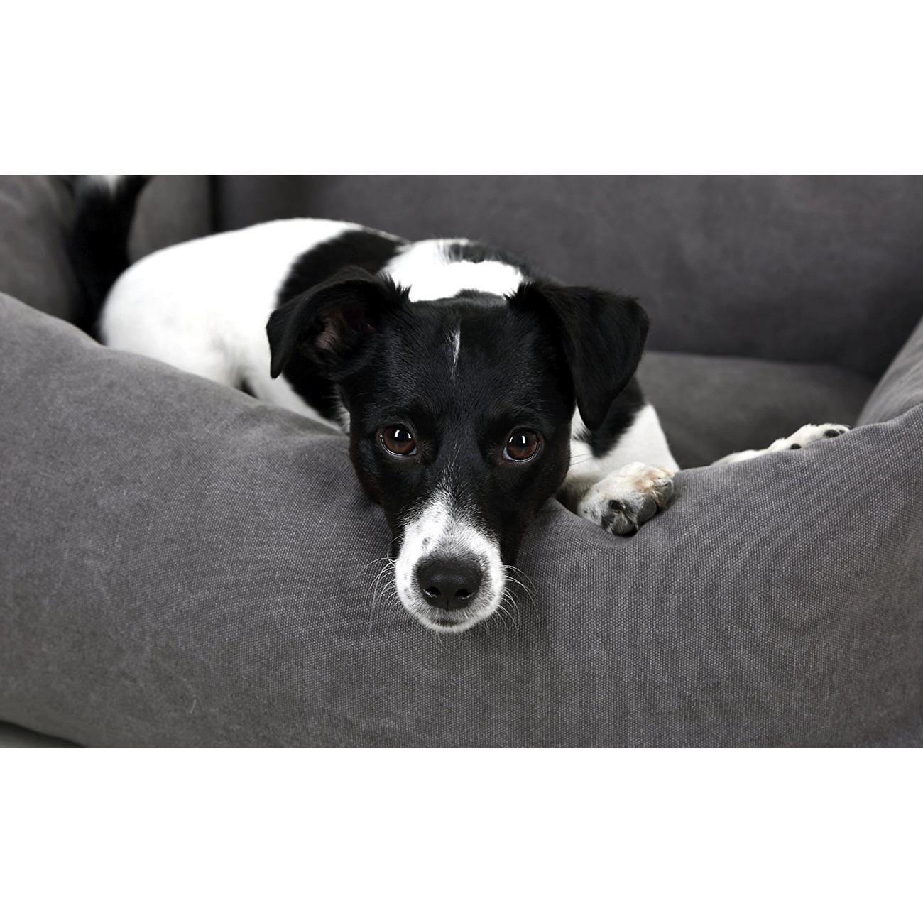 Kerbl Hundebett Lucca grau, Bild 3