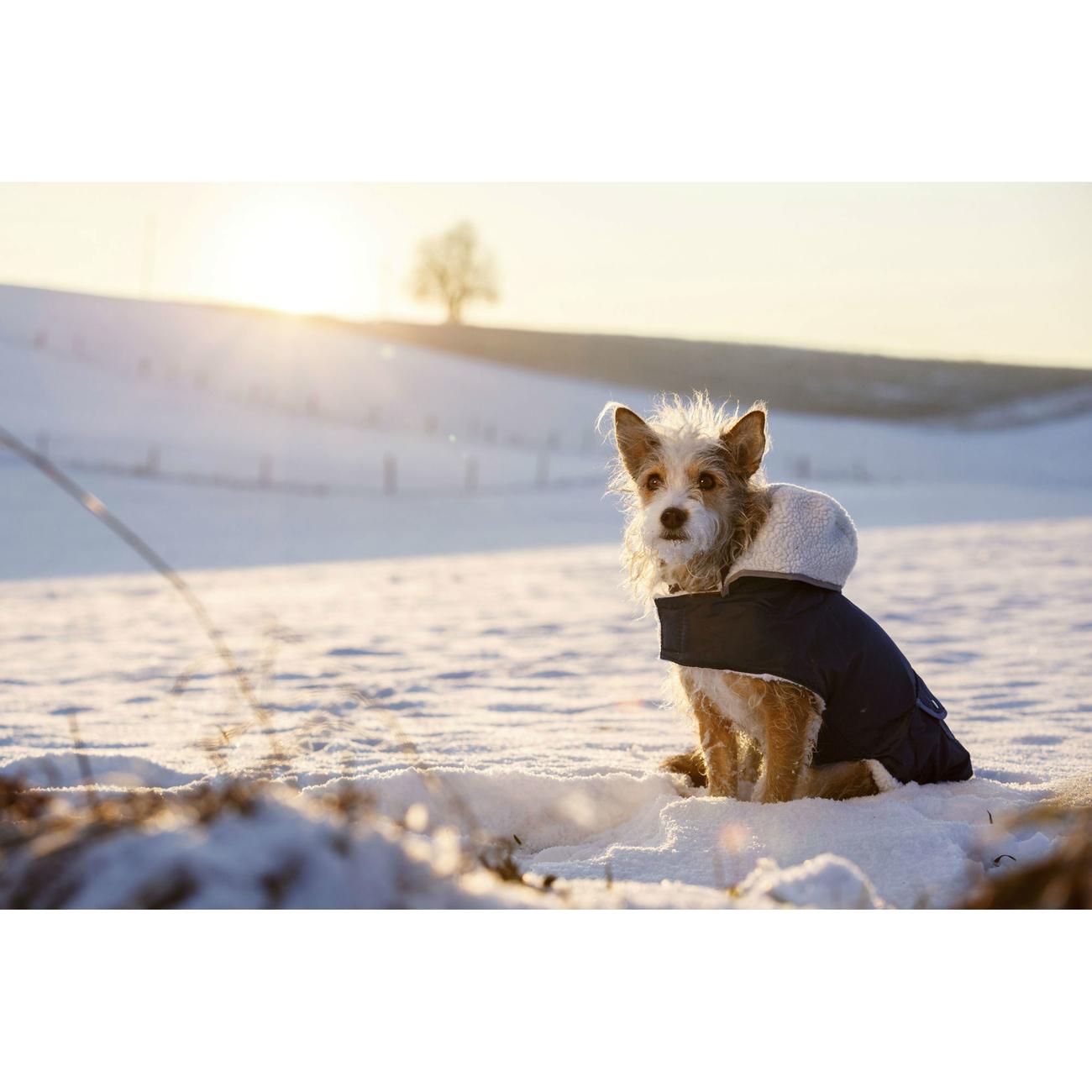 Kerbl Hundemantel TEDDY, Bild 4