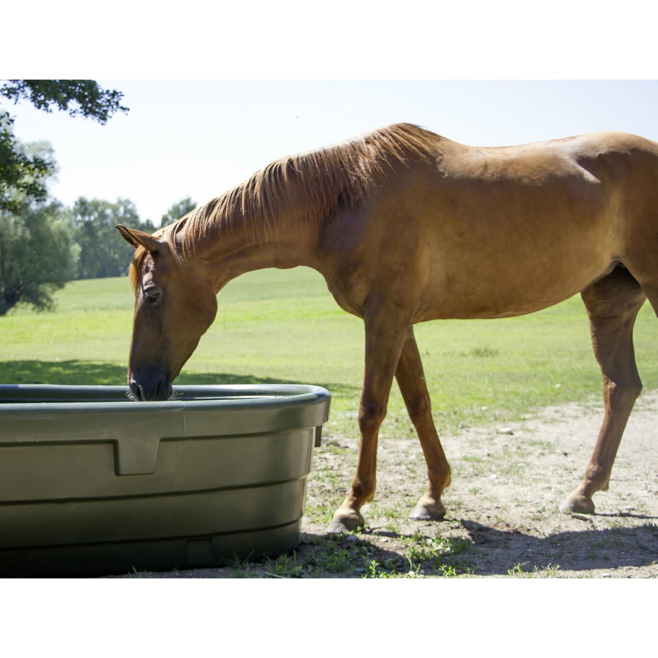 Kerbl Weidetränke für Pferde, Bild 9