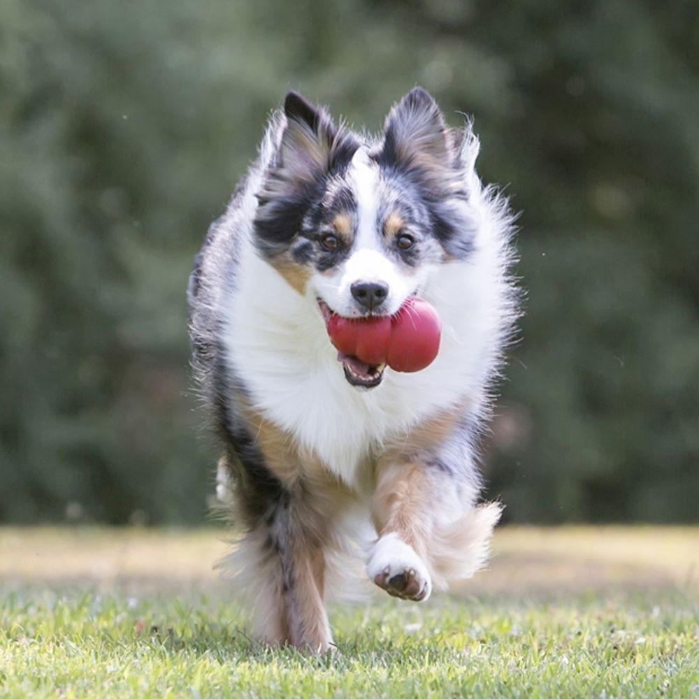 KONG Classic Hundespielzeug, Bild 4