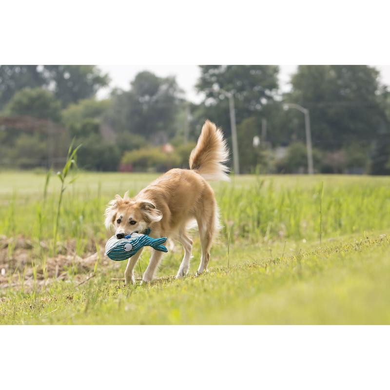KONG CuteSeas Hundespielzeug, Bild 5