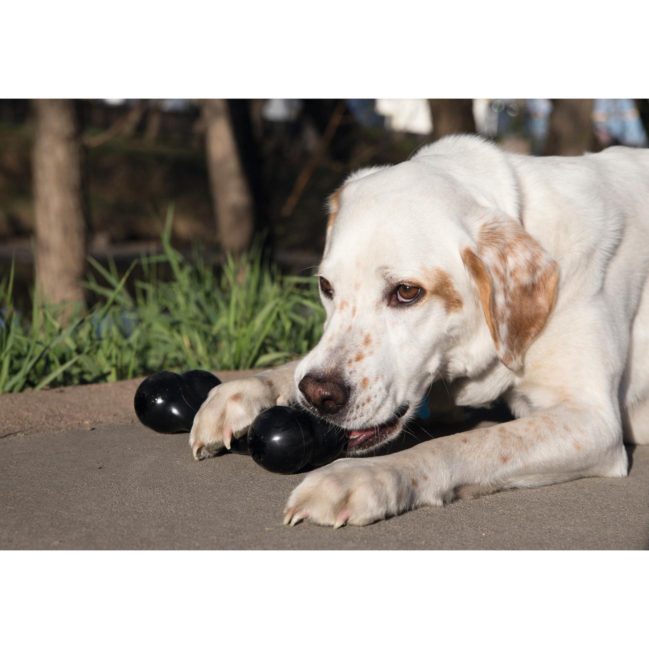 KONG Extreme Goodie Bone Hundespielzeug, Bild 3