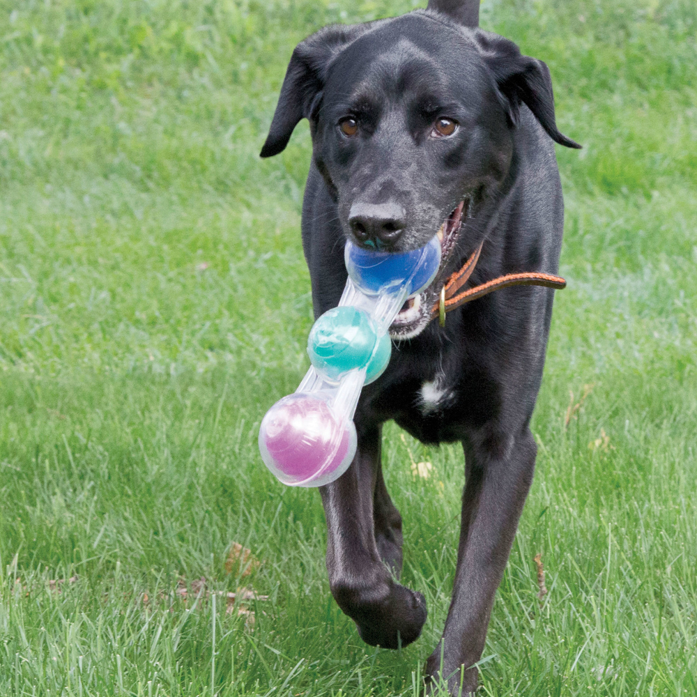 KONG Tri-Fun Hundespielzeug, Bild 4