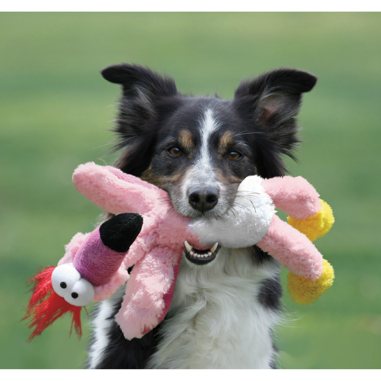 KONG Wild Knots Hundespielzeug, Bild 6