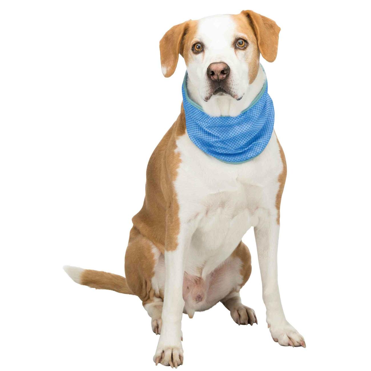 Trixie Kühlbandana Kühlhalsband für Hunde 30136, Bild 4