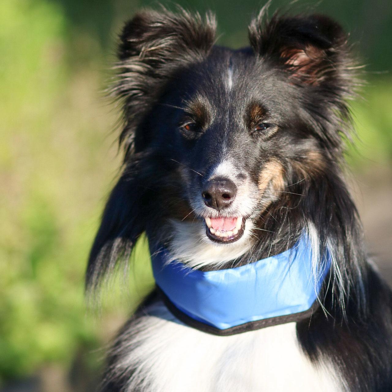 Karlie Kühlhalsband für Hunde Bandana Fresk, Bild 2