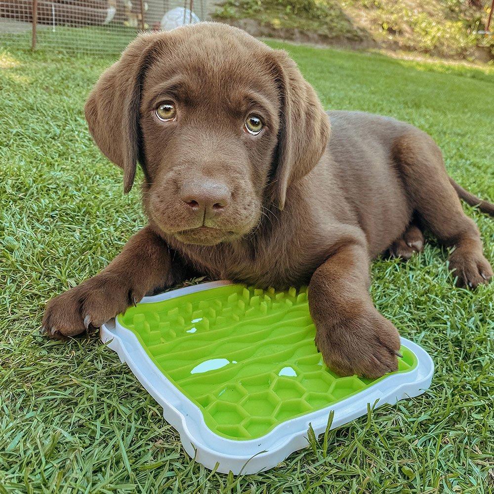 TRIXIE Lick'n'Snack Schleckplatte für Hunde 34952, Bild 4