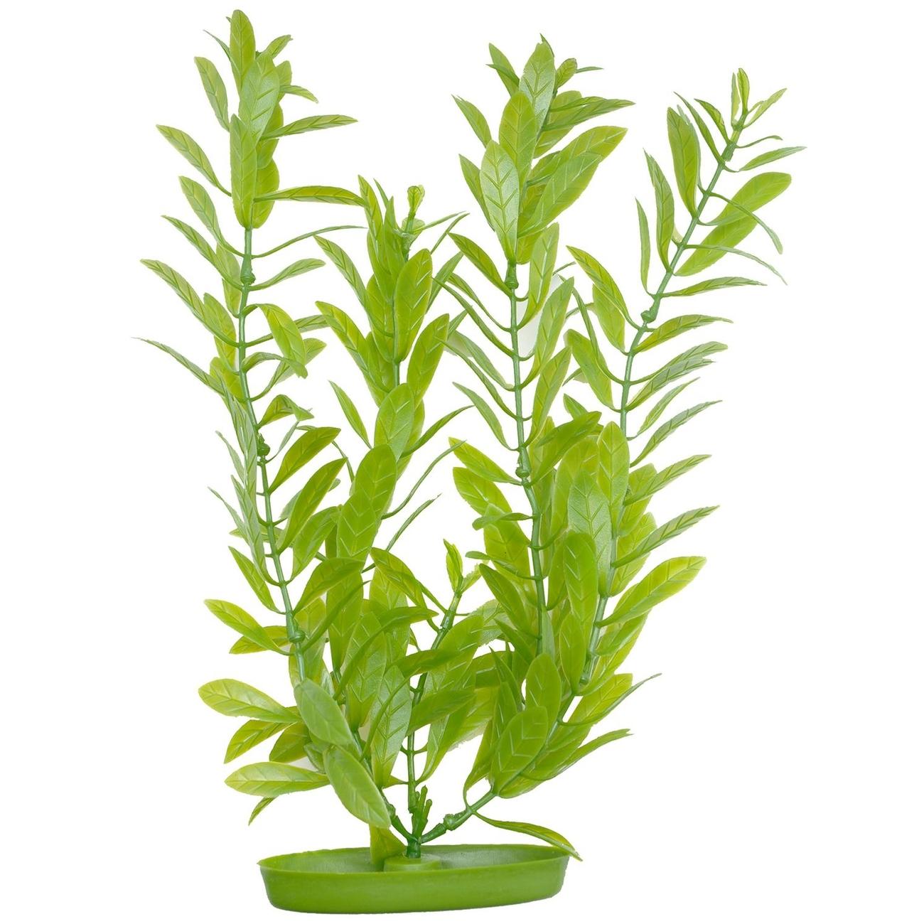 Marina Aquascaper Pflanzen ab 30 cm, Bild 5