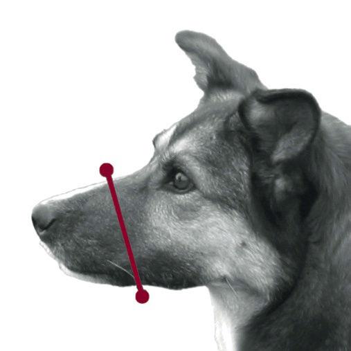 Trixie Maulkorb für Hunde aus Kunststoff 17601, Bild 3
