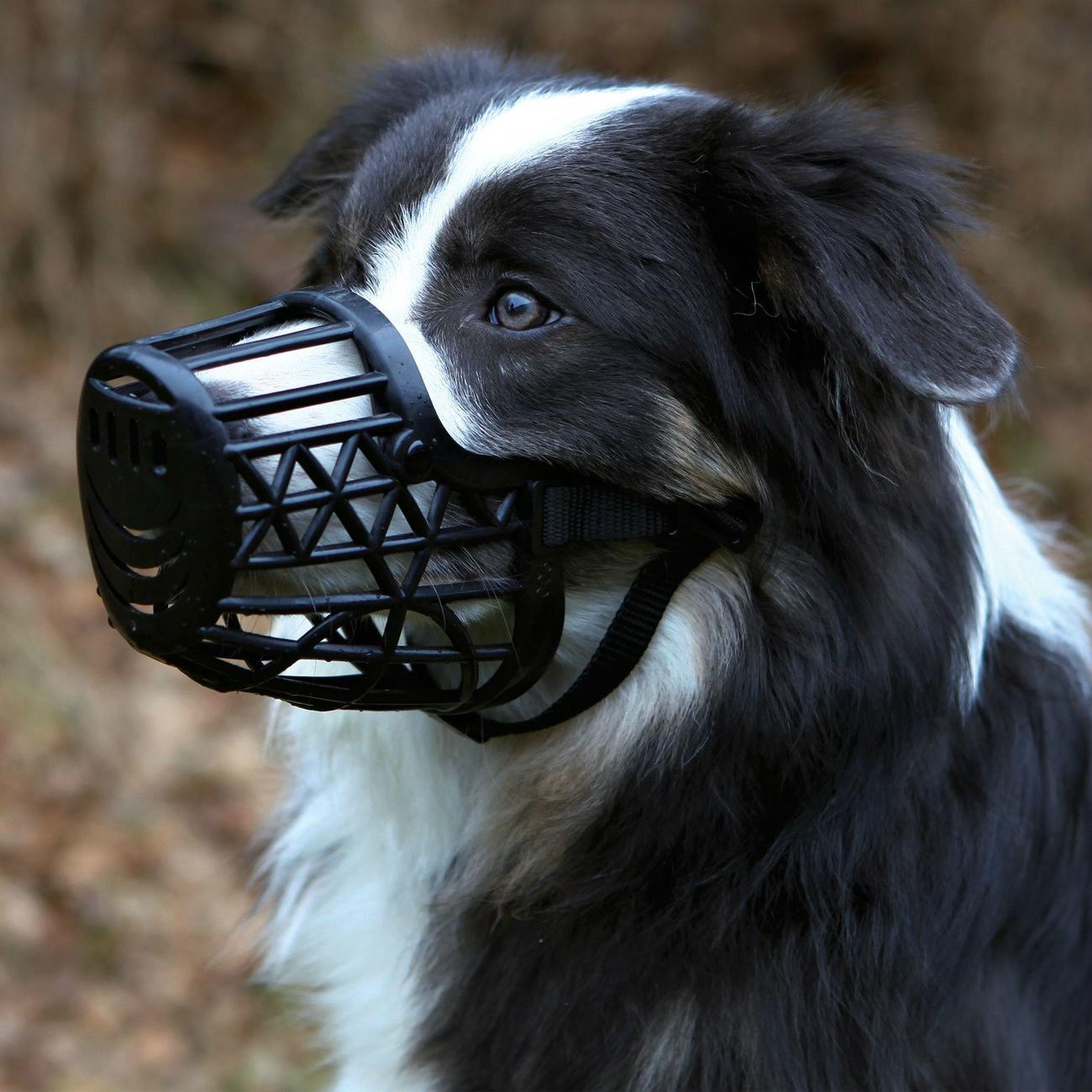 Trixie Maulkorb für Hunde aus Kunststoff 17601, Bild 2