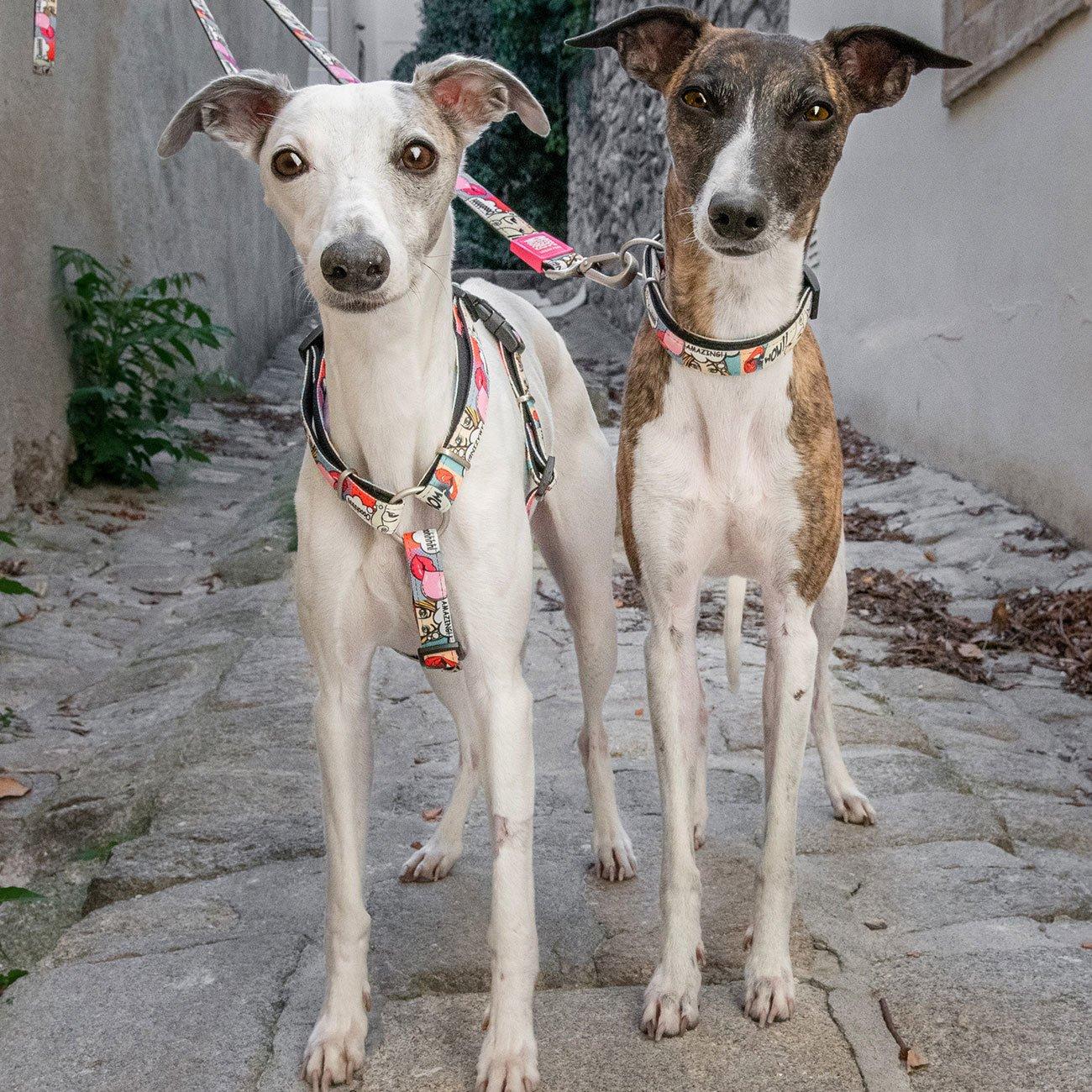 Max & Molly H-Geschirr für Hunde Missy Pop, Bild 3