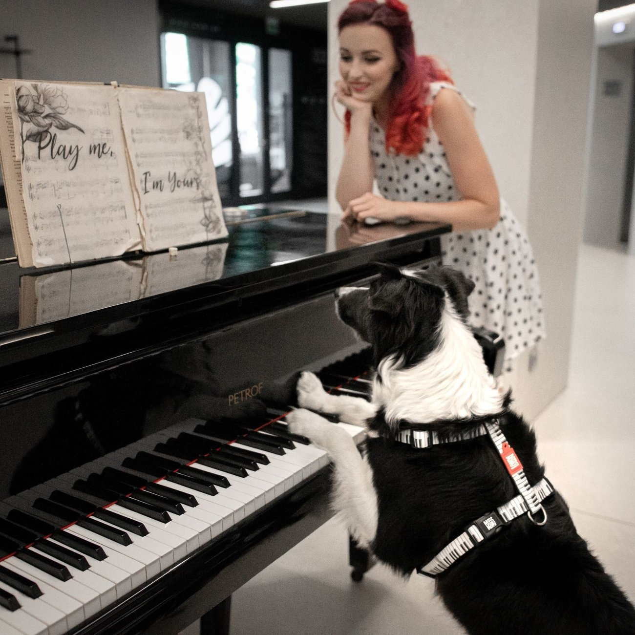 Max & Molly H-Geschirr für Hunde Piano Preview Image