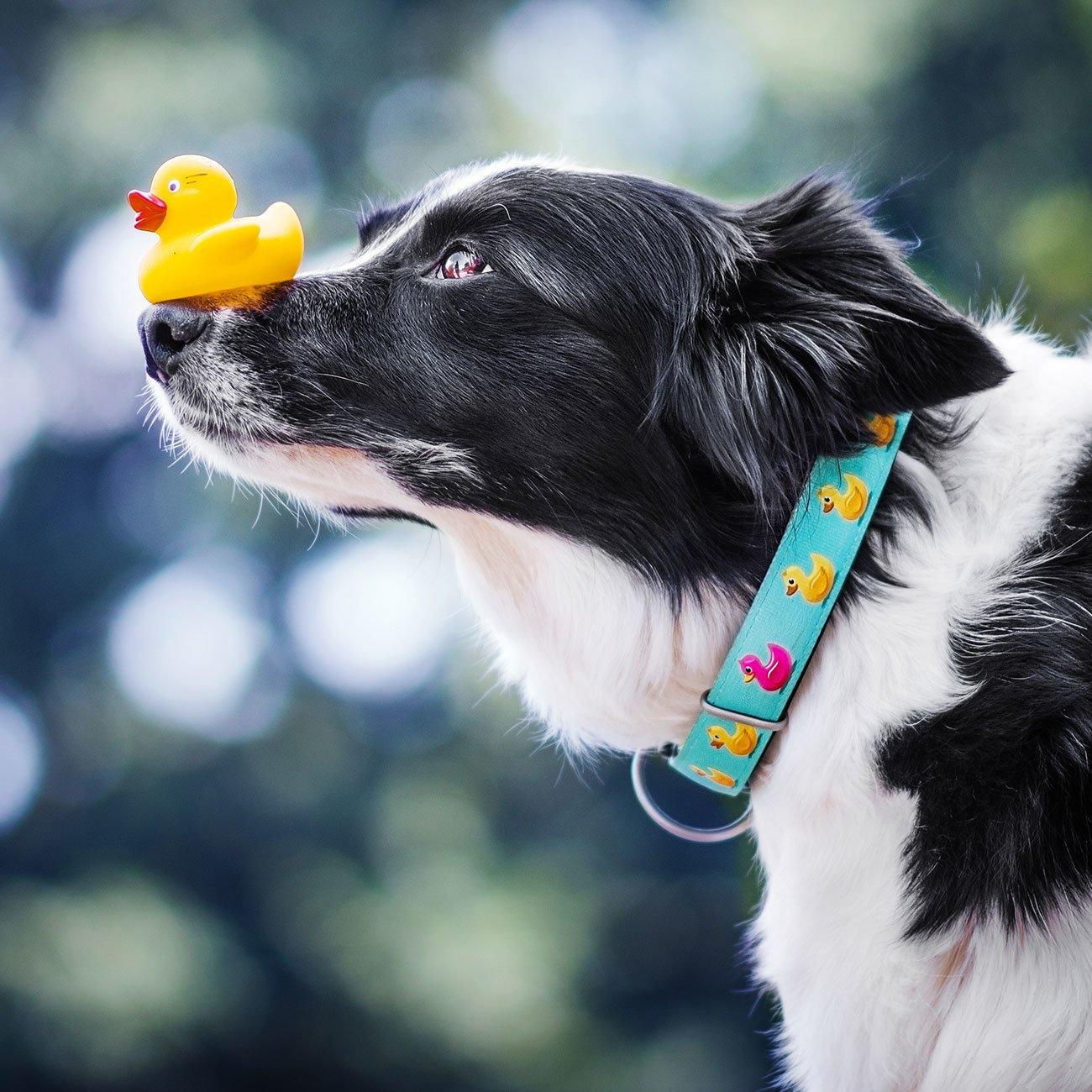 Max & Molly Smart ID Hundehalsband Ducklings, Bild 3