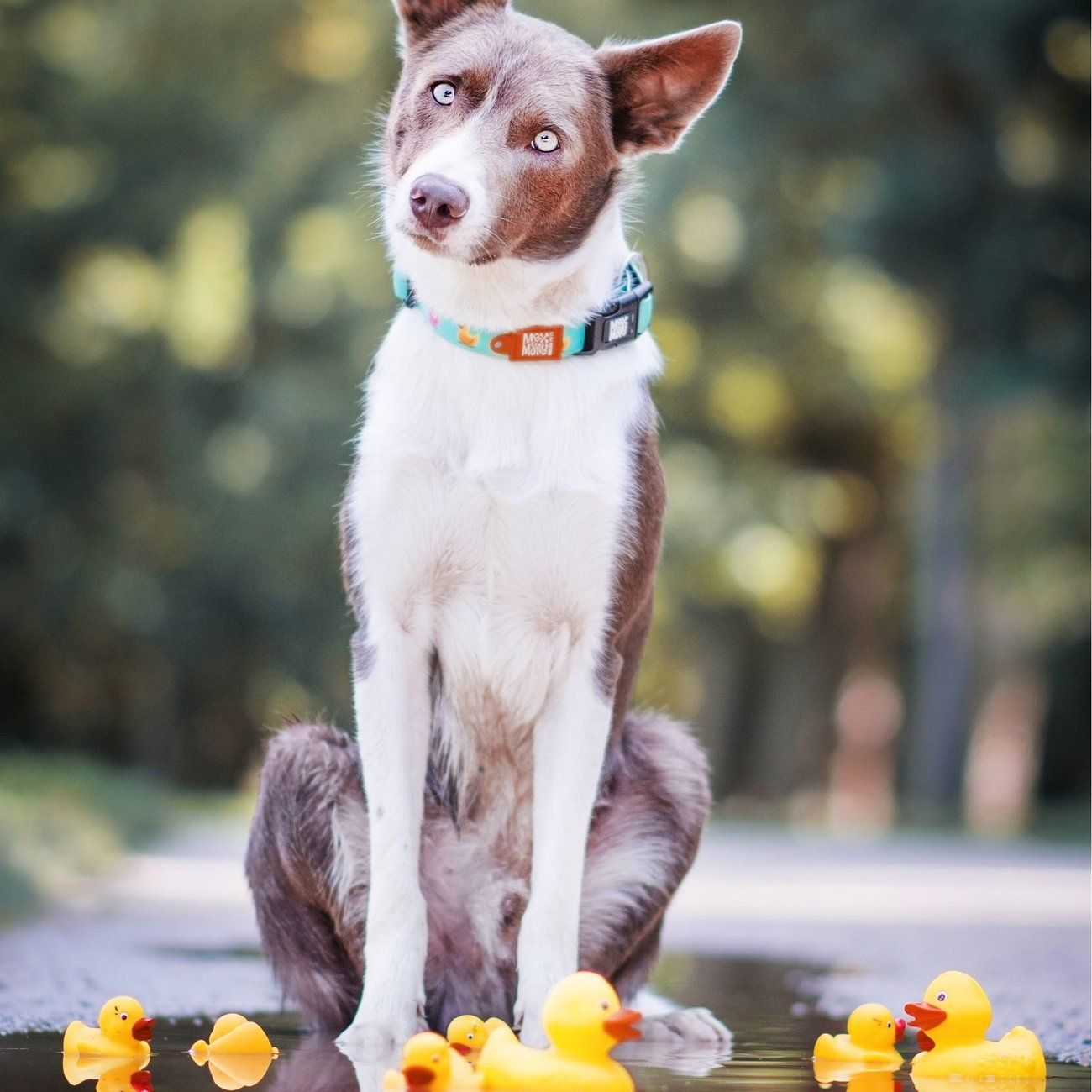 Max & Molly Smart ID Hundehalsband Ducklings, Bild 4