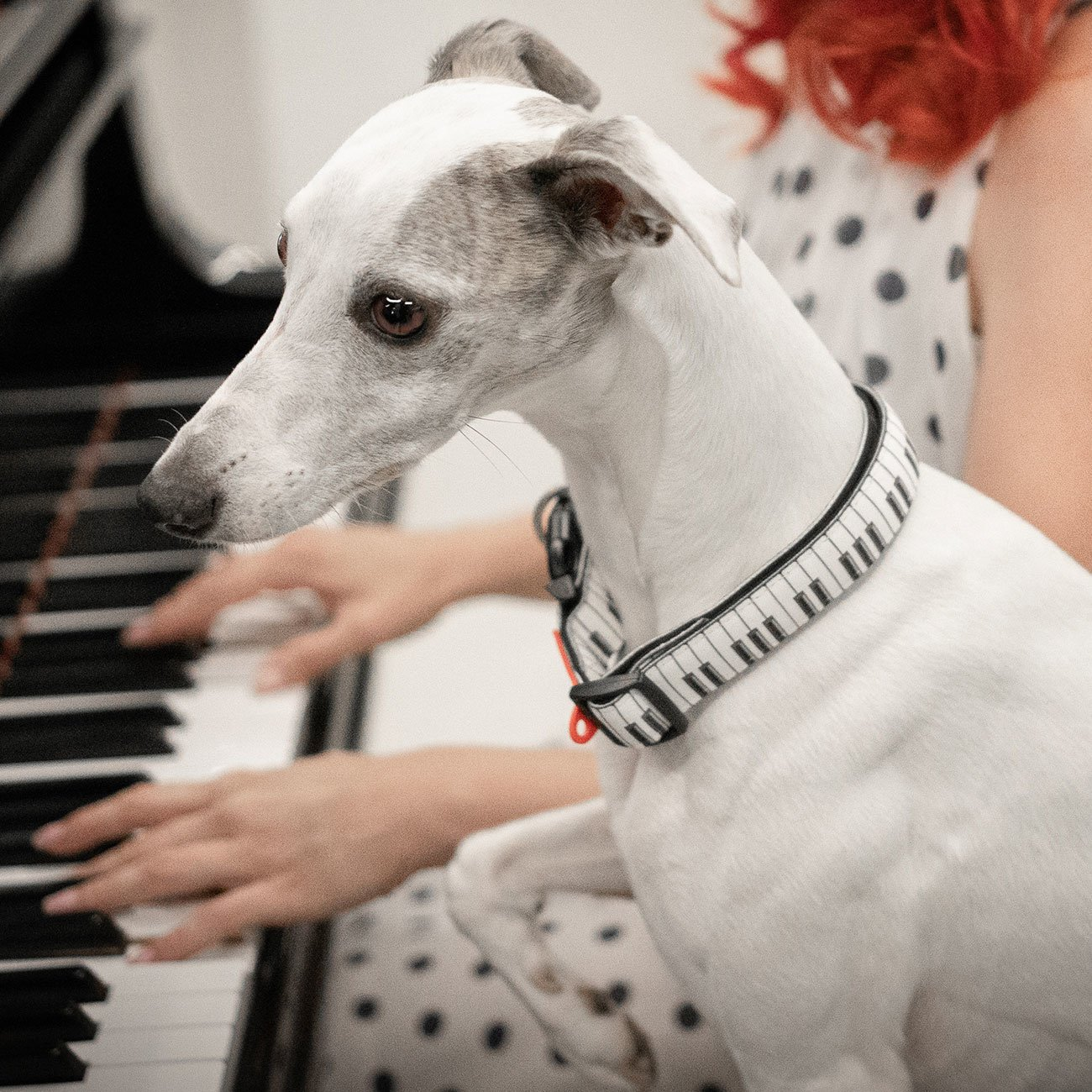 Max & Molly Smart ID Hundehalsband Piano Preview Image