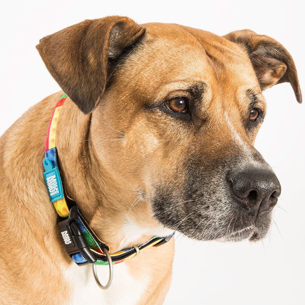 Max & Molly Smart ID Hundehalsband Playtime 2.0, Bild 2