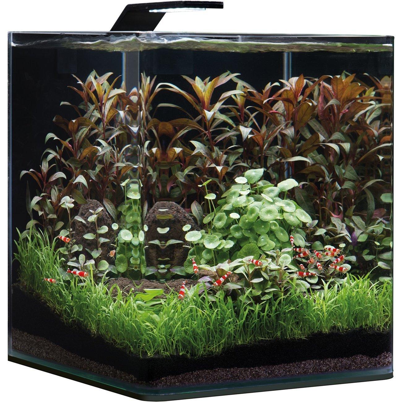 Dennerle NanoCube Basic Style LED Aquarium, Bild 6