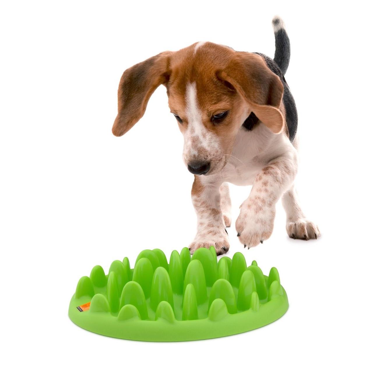 Northmate Green Mini Hundenapf, Bild 5