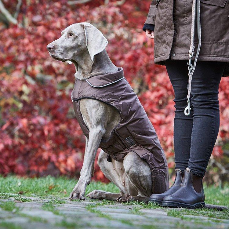 Wolters Outdoorjacke Jack für Hunde, Bild 2